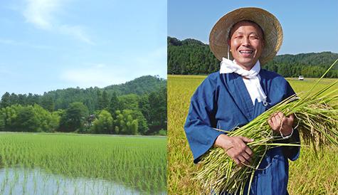 微生物自然農法の米作り